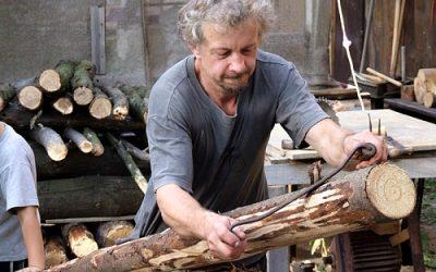 Kus dřeva ze stromu