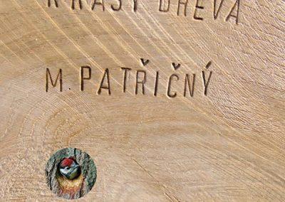 Kniha obal Všecky krásy dřeva