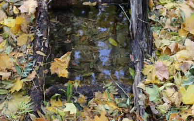 Zrcadlo v lese